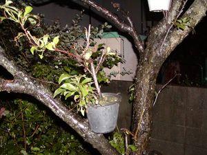 木の枝の上の植木?1