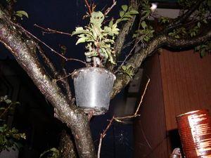 木の枝の上の植木?2