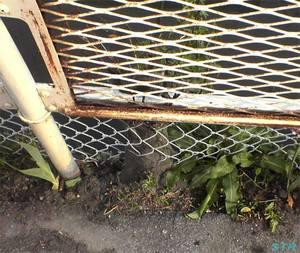 金網フェンスを突き抜ける木