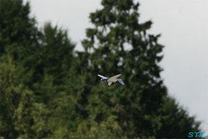 空の夢もみの木パーク ブルーウィングス展示飛行