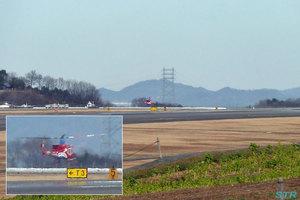 高松空港で「きび」を目撃