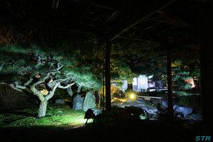 栗林公園のライトアップを見てきた