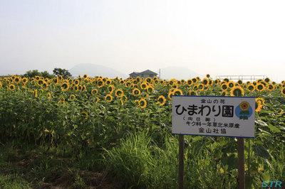 ひまわり園