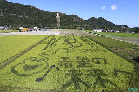 空ちゃん田んぼ2015